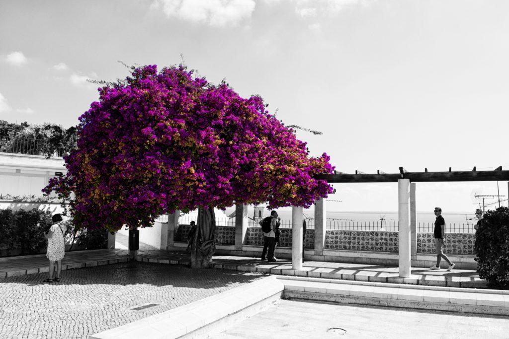 JBADIE_Portugal_73